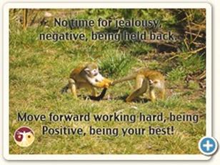 Postcard_Thumb#33